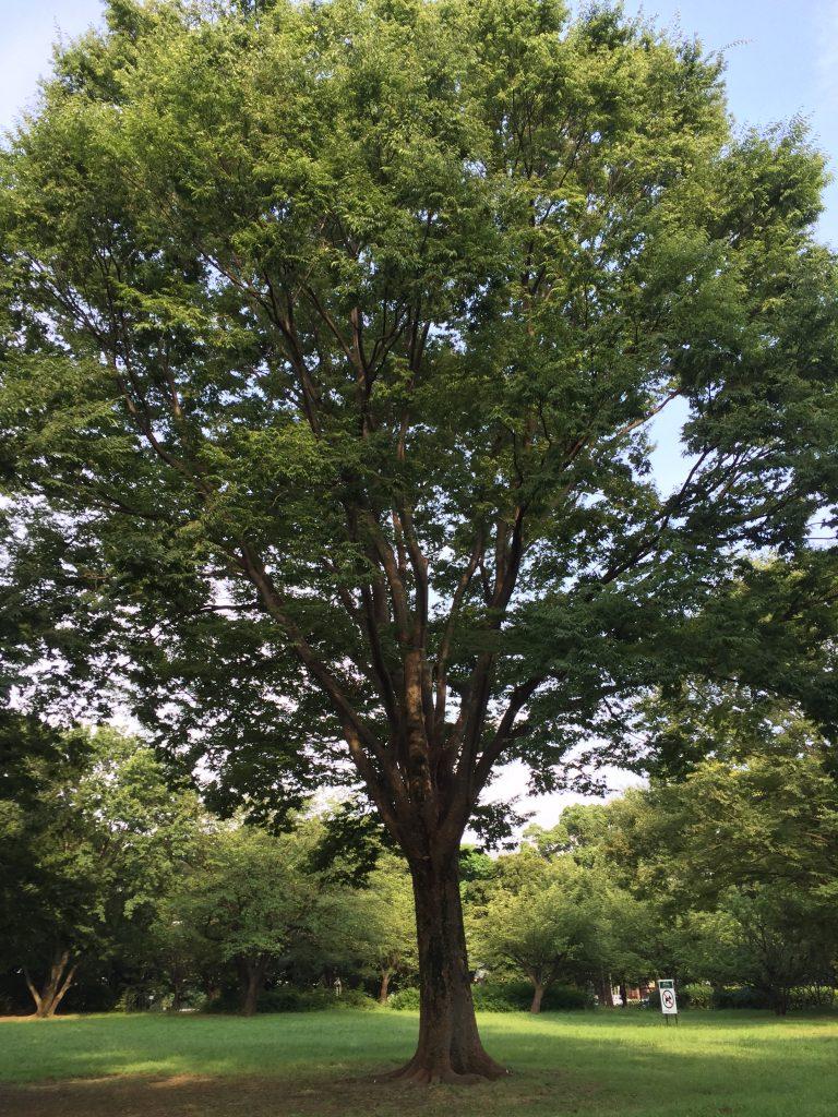 砧公園の樹